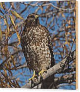 Red-tailed Hawk In A Willow Tree Wood Print