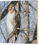 Red-tailed Hawk Looking Wood Print