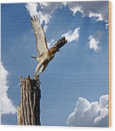Red-tailed Hawk Perch Series 5 Wood Print