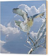 Red-tailed Hawk Pirouette Pose Wood Print