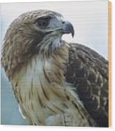 Red-tailed Hawk Profile Wood Print