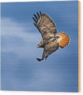 Red-tailed Hawk Soaring Square Wood Print