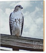 Red Tailed Hawk Waiting Wood Print