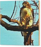 Red-tailed Hawk Watching Wood Print