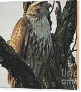 Red Tailed Morning Wood Print