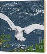 Red Tailed Tropic Bird Wood Print