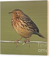 Red-throated Pipit On A Fence Wood Print