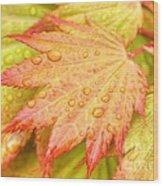 Red Tip Leaf Wood Print
