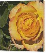 Red-tipped Yellow-orange Rose Wood Print