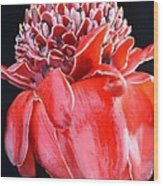 Red Torch Ginger On Black Wood Print