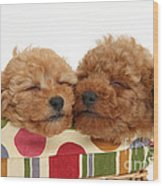 Red Toy Poodle Puppies Wood Print