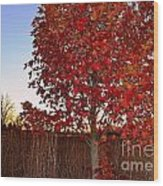 Red Tree At Sunset Wood Print