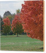 Red Trees 2 Wood Print