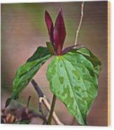 Red Trillium Wood Print