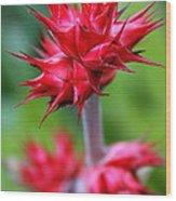 Red Tropical Flowers Wood Print by Karon Melillo DeVega