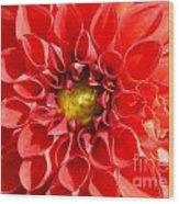 Red Tubular Flower Wood Print