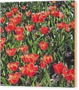 Red Tulip Bed Wood Print