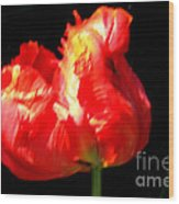 Red Tulip Blurred Wood Print by M C Sturman