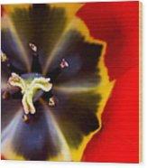 Red Tulip Macro Wood Print