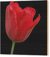 Red Tulip Open Wood Print
