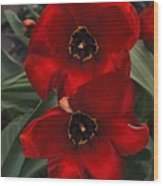 Red Tulip Pair Wood Print