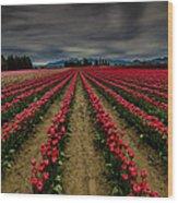 Red Tulip Rows Wood Print