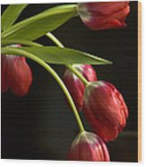 Red Tulips Wood Print by Cindy Rubin