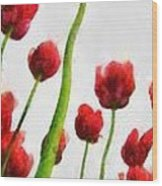 Red Tulips From The Bottom Up Triptych Wood Print
