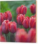 red tulips II Wood Print