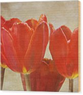 Red Tulips in Art Wood Print