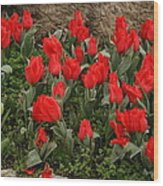 Red Tulips Wood Print by Maeve O Connell