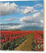 Red Tulips Of Skagit Valley Wood Print