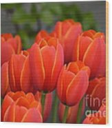 Red Tulips Outlined In Yellow Wood Print