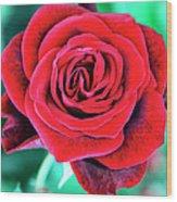 Red Velvet Palm Springs Wood Print