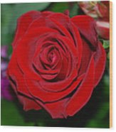 Red Velvet Rose Wood Print