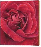 Red Velvety Rose Wood Print