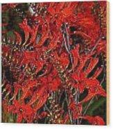 Red Devils Tongue Vine Vertical Wood Print