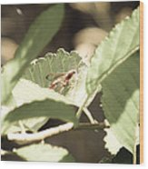 Red Wasp Wood Print