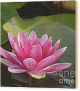 Red Water Lily 4 Wood Print