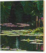 Red Water Lily In A Tropical Pond Wood Print by Julio Solar