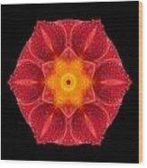 Red Wet Lily Flower Mandala Wood Print