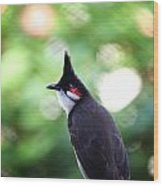 Red Whiskered Bulbul Wood Print