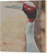 Red White And Beak Wood Print
