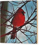 Red White And Blue Cardinal Wood Print