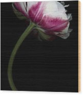 Red White Double Tulip Wood Print