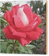 Red-white Rose Wood Print