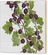Red Wild Forest Berries Wood Print