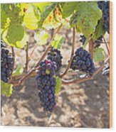 Red Wine Grapes Hanging On Grapevines Wood Print