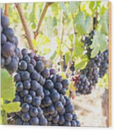 Red Wine Grapes Hanging On Grapevines Vertical Wood Print