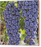 Red Wine Grapes Hanging On The Vine Wood Print